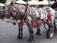 kraków, dorożkarze, konie, rynek główny, krakowskie stowarzyszenie obrony zwierząt