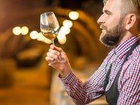 branża winiarska, sezon jesienno zimowy, plany, inwestycje, założenia,