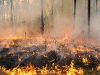 portugalia, pożar lasów, wyspy, akcja ratownicza, madera, funchal,