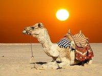 turyści, zakaz, zjednoczone emiraty arabskie, dubaj, emirat, turystyka, restauracja