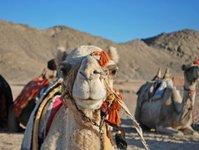 Hurghada, polski kurort w Egipcie, atrakcje, nad Morzem Czerwonym, Dahar, Sakkala, na Daharze, plaże, zwiedzanie, Hurghady, biura podróży, Egipt