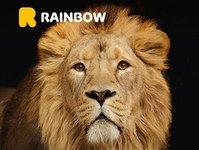 egzotyka, rainbow, kampania, lew, symbol, promocja