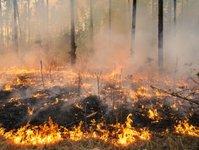 pożar, Tatry Wysokie, Słowacja, ogień, ewakuacja, tatrzańska kotlina,