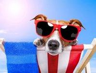 louvre hotels group, turyści, zwierzęta domowe, pets friendly
