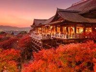 airbnb, wynajem, japonia, odwołane, mieszkania, turyści,zezwolenia, licencja,