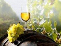 wino, gastronomia, enoturystyka, polska rada winiarstwa