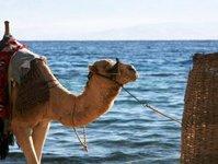tunezja, turystyka, wzrost, turyści, gospodarka, przychody,